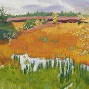 Autumn Colours Down the Bog