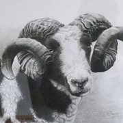 Jacob Ram