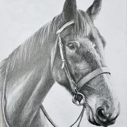 Pilgrim (horse)