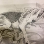 Sleeping Beagle Study