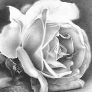 Irish Art, A Rose by Any Other Name,