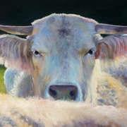 Happy Heifer
