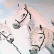 collage of connemara ponies