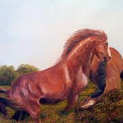 stallion fight