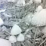 Art 'Mushrooms'