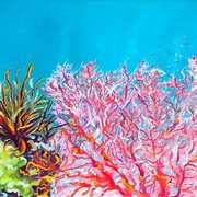 Fonds Marins Pink Coral