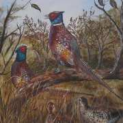 Summer Pheasants