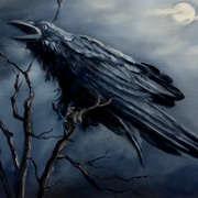 Night of the dark 1
