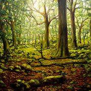 Tomies Woods Killarney