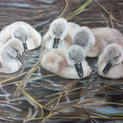 Art 'SIX LITTLE CYGNETS'