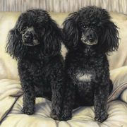 Irish Art, The Poodles,