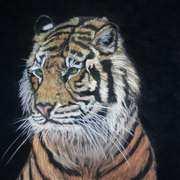 Dublin Tiger