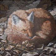 Red Fox Rest