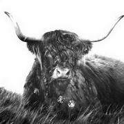 Irish art. Highlander, artist Kelly Hood, England and Kerry