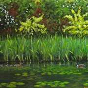 Ducks on St.Annes Lake