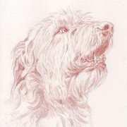 Irish Wolfhound I