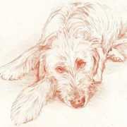 Irish Wolfhound II