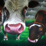 Achill Cows