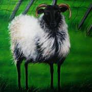 Dooagh Sheep