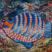 Happy Fish - Blue Eyed Boy