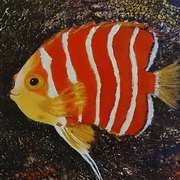 'Peppermint Angelfish'