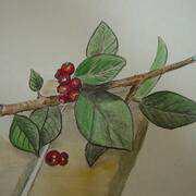 spring berries