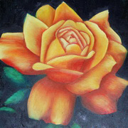 Orange Rose On Black
