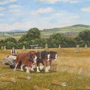 A Field of Irish Wheat