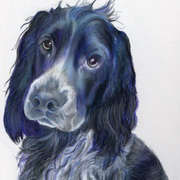 Irish Art, Blue Roan Spaniel,