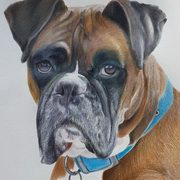 Irish Art, Boxer,
