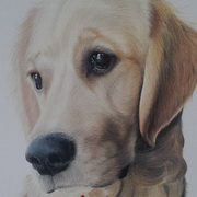 Buster, Polychromos