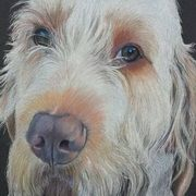 Irish Art, Italian Spinone,