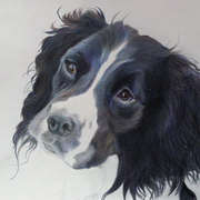 Irish Art, Spaniel,