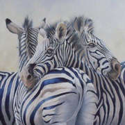 360 Degree Zebras