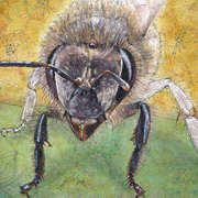 BEE (15th picture of my series 'Endangered Species')