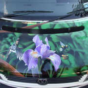 Iris (on the bonnet of a campervan)