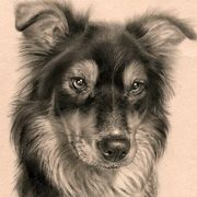 Irish Art, Little Collie,