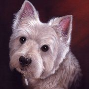 Irish Art, West Highland Terrier,