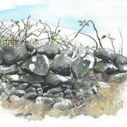 Dry stone wall 1