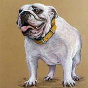 Bob, the Bulldog
