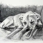 Irish Art, Buster Sleeping,