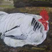 Resting Rooster