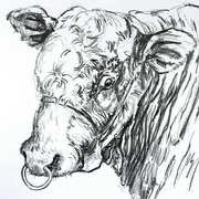 Irish Art, Coromandel Herd,