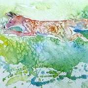 Fox, Hunting in rhe Sun