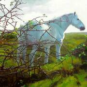 Whitethorn Mare, Oil on Canvas, 24 x 18 ins by Barrie Maguire