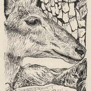 Wildlife I, Glendalough, Pen on Paper, 39cm x 11cm by Deborah McCoy