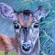 Deer Portrait by Deborah McCoy