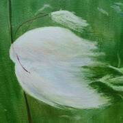 Bog Cotton, Acrylic and egg tempera, 42 x 50 cm framed by Phyl Staunton